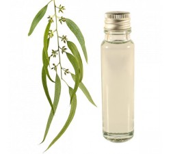 Eucalyptus 25ml - Essential Oil