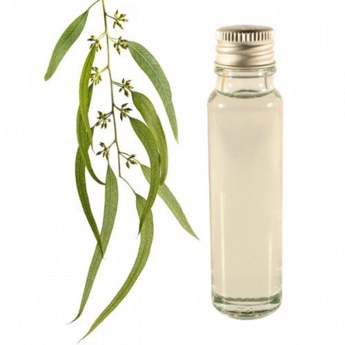 eucalyptus essential oil 25ml