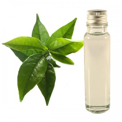 green tea essential oil 25ml