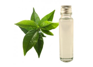 Green tea essential oil 20ml